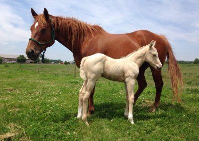 horse-herp
